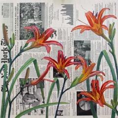 Summer (July) - Daylilies