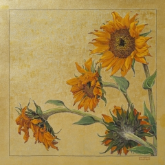 Summer - Sunflowers