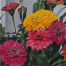 Zinnia painting